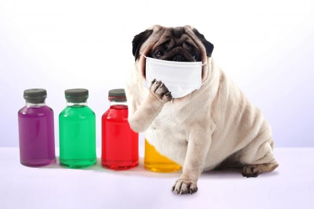 犬咳・ガーガーケフケフは【気管虚脱】かも♦︎どんな咳の音?どんな病気?【動画あり】