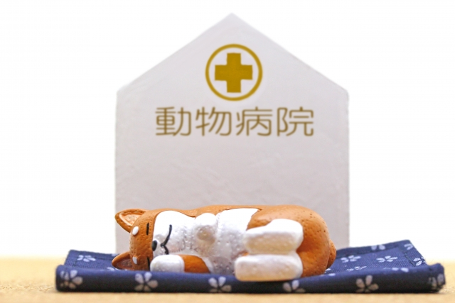 【気管虚脱・手術後の様子】退院して愛犬は元気になった?【かかった費用公開】